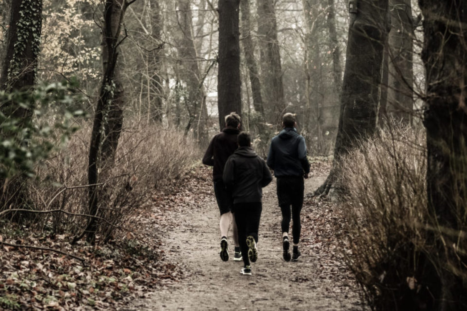 joggingwoods-1400x547